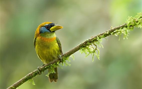 Papéis de Parede Pássaro de pena verde, fundo embaçado