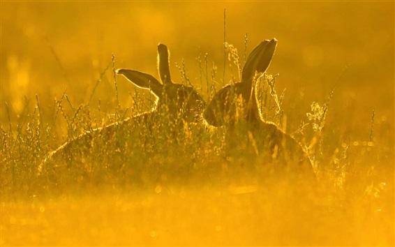 Обои Заяц, трава, лето, солнце