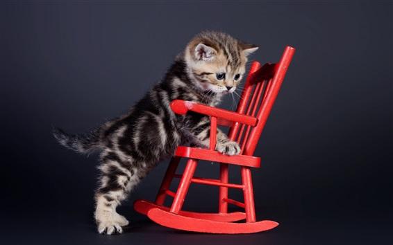 Papéis de Parede Gatinho e cadeira