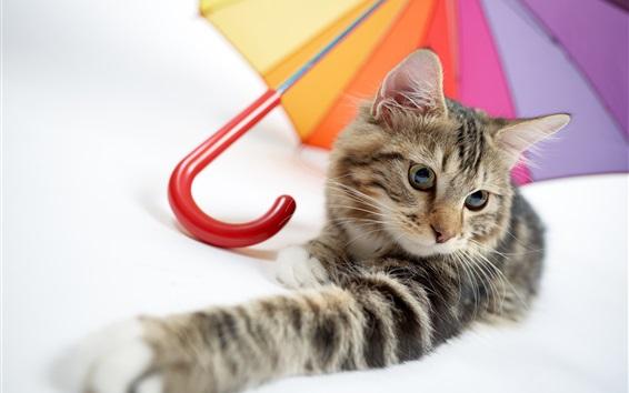 Wallpaper Kitten and umbrella
