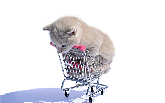 Wallpaper Kitten in shopping cart, white background