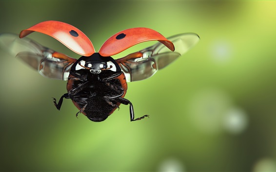 Wallpaper Ladybug flight, wings, insect macro photography