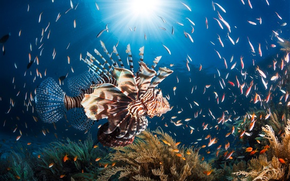 Papéis de Parede Peixe-leão, mar azul, peixe, sol