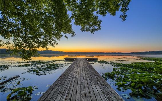 Wallpaper Lotus lake, pier, trees