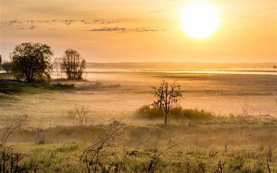 Wallpaper Morning, trees, grass, fog, sunrise