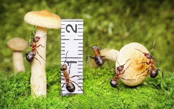 Papéis de Parede Cogumelos e formigas