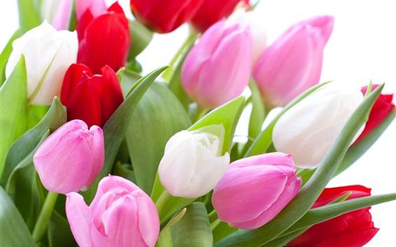 Papéis de Parede Rosa e tulipas vermelhas, fundo branco