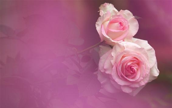 Wallpaper Pink style roses, bokeh