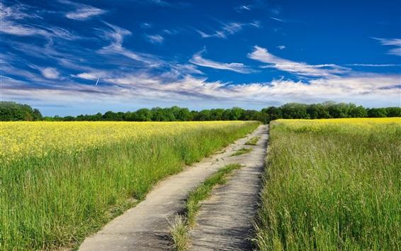 배경 화면 도로, 유채 꽃밭, 노란 꽃, 구름, 푸른 하늘