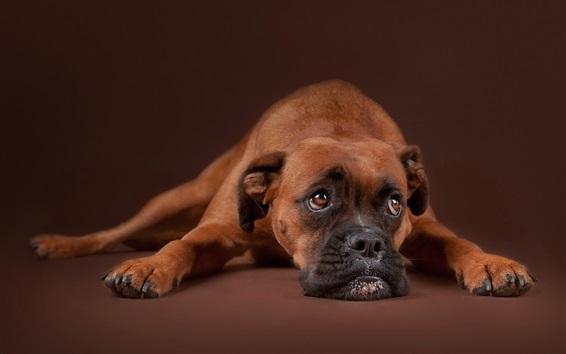 Papéis de Parede Tristeza, cachorro, resto, marrom
