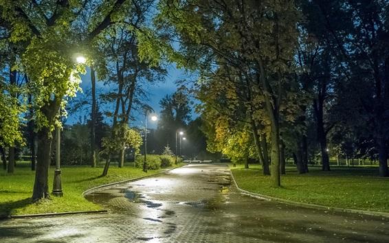 Wallpaper Saint Petersburg, park, trees, path, lights, night, Russia