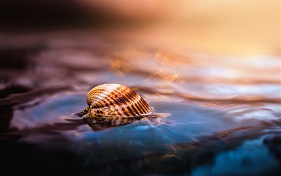 Fond d'écran Shell dans l'eau