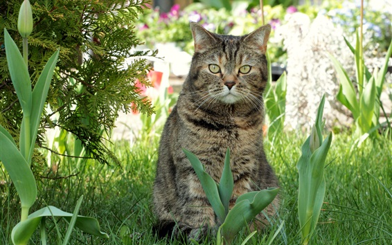 Wallpaper Spring, cat, flowers, grass