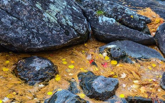 Обои Камни, желтая трава и листья, осень