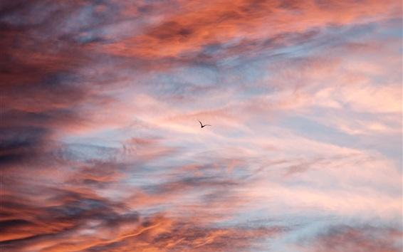 Wallpaper Sunset sky, clouds, flight bird