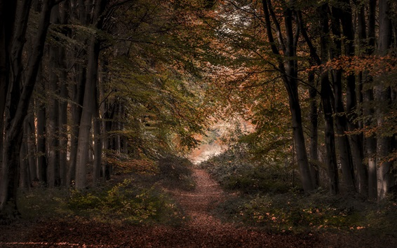 Wallpaper Trees, forest, autumn, path, leaves