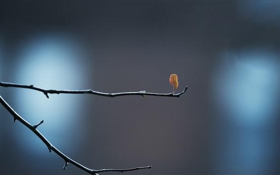 Wallpaper Twigs, leaf, bud