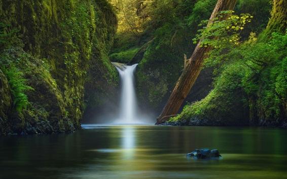 Papéis de Parede EUA, rio, cachoeira, árvores, verde