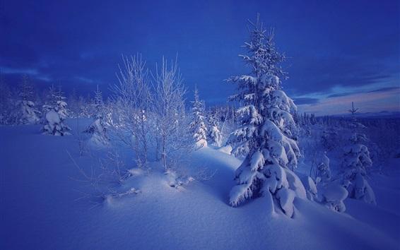 壁紙 冬、夕方、雪、木々、ノルウェー
