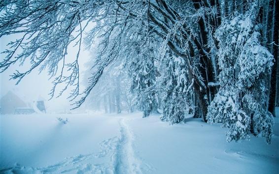 Fond d'écran Hiver, neige épaisse, chemin, arbres