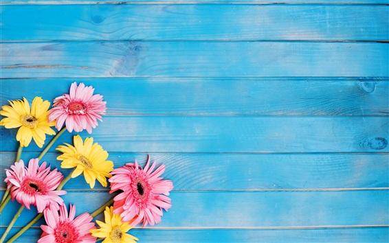 Flores Amarillas Y Rosadas Del Gerbera, Fondo Azul De
