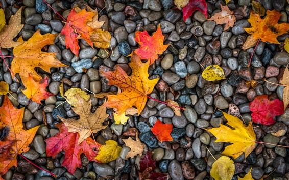 壁纸 黄色和红色的枫叶,石头
