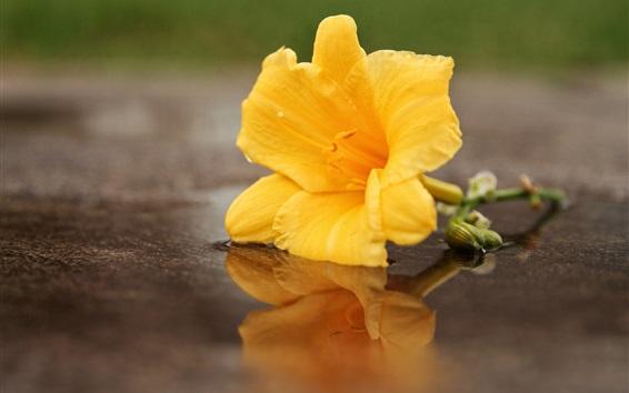 Papéis de Parede Flor amarela, água