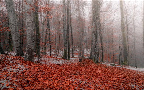 Wallpaper Autumn, forest, trees, red leaves, snow
