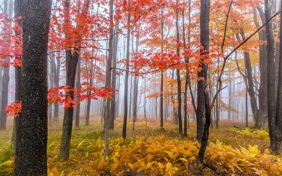 Wallpaper Autumn, trees, red and yellow leaves, fog, morning