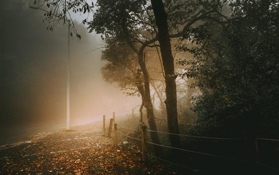 Hintergrundbilder Herbst, Bäume, Straße, Zaun, Blätter