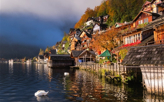 Wallpaper Beautiful city view, Hallstatt, Austria, houses, lake, ducks