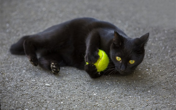 Wallpaper Black cat play a ball on ground