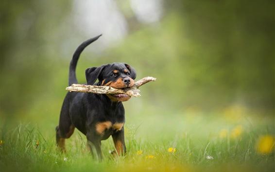 Papéis de Parede Black peppy catch stick