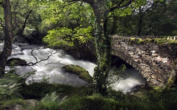 Wallpaper Bridge, river, stones, trees