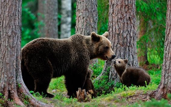 Wallpaper Brown bears family, trees