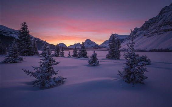Wallpaper Canada, Banff National Park, forest, valley, snow, winter, mountains