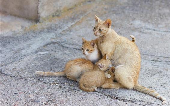 Fond d'écran Maman chat et trois chatons