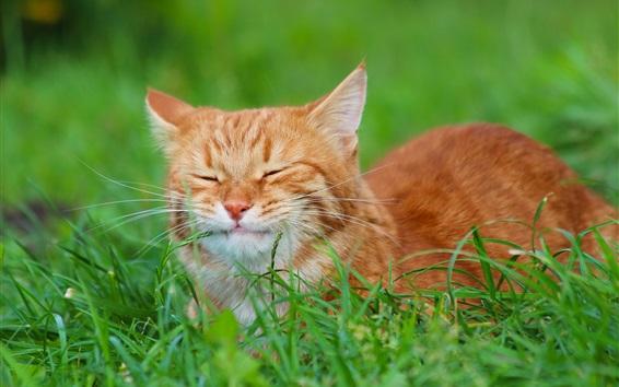 壁紙 猫の残り、緑の草