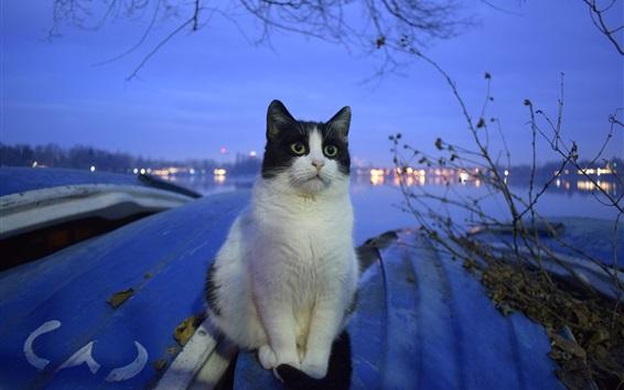 Papéis de Parede Gato, rio, noite