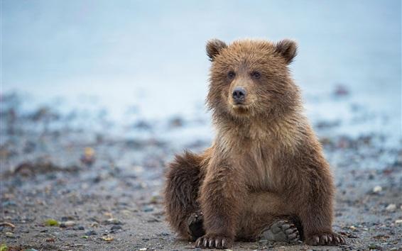 Wallpaper Cute bear cub, Alaska