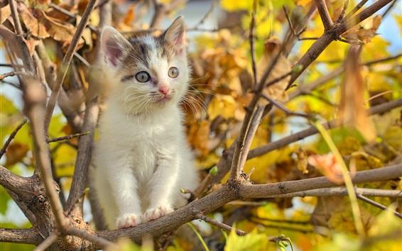 Обои Симпатичный пушистый котенок на дереве