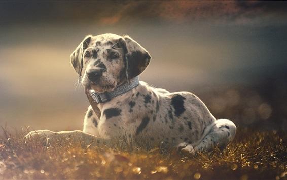 Wallpaper Cute puppy, rest, grass