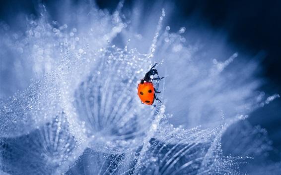 壁紙 タンポポ、水滴、ミツバチ