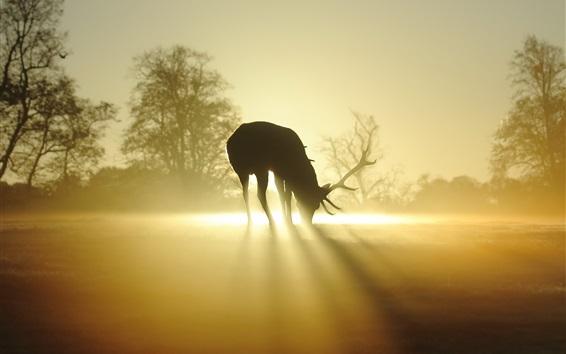 Papéis de Parede Veado, silueta, nevoeiro, raios sol, manhã