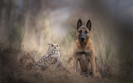 Wallpaper Dog and owl are friends