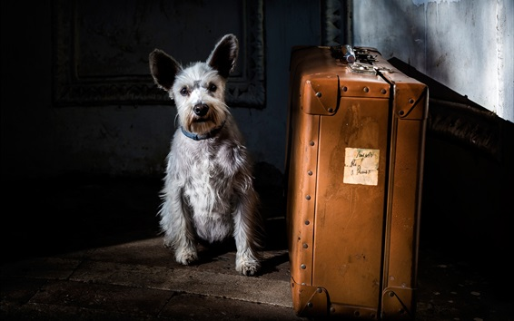 Papéis de Parede Cão e mala