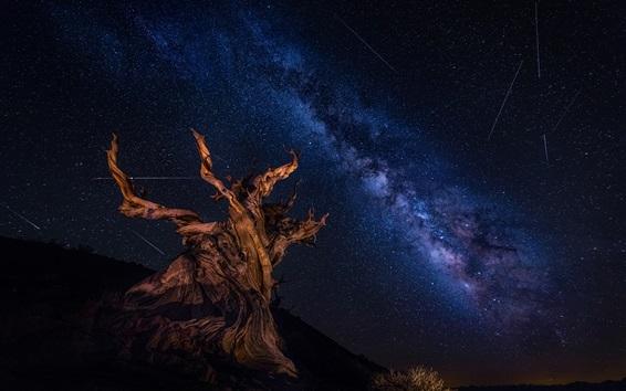 Hintergrundbilder Trockener Baum, sternenklar, Himmel, schöne Nacht