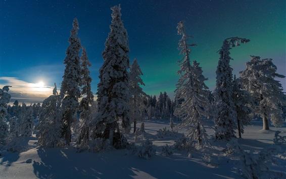 Wallpaper Finland, Kuusamo, forest, winter, snow, sun rays