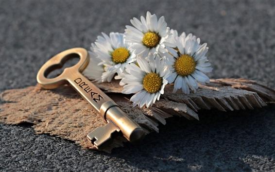 壁紙 花、白いデイジー、キー