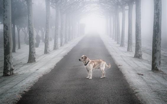 Papéis de Parede Nevoeiro, árvores, estrada, cão, neve, inverno